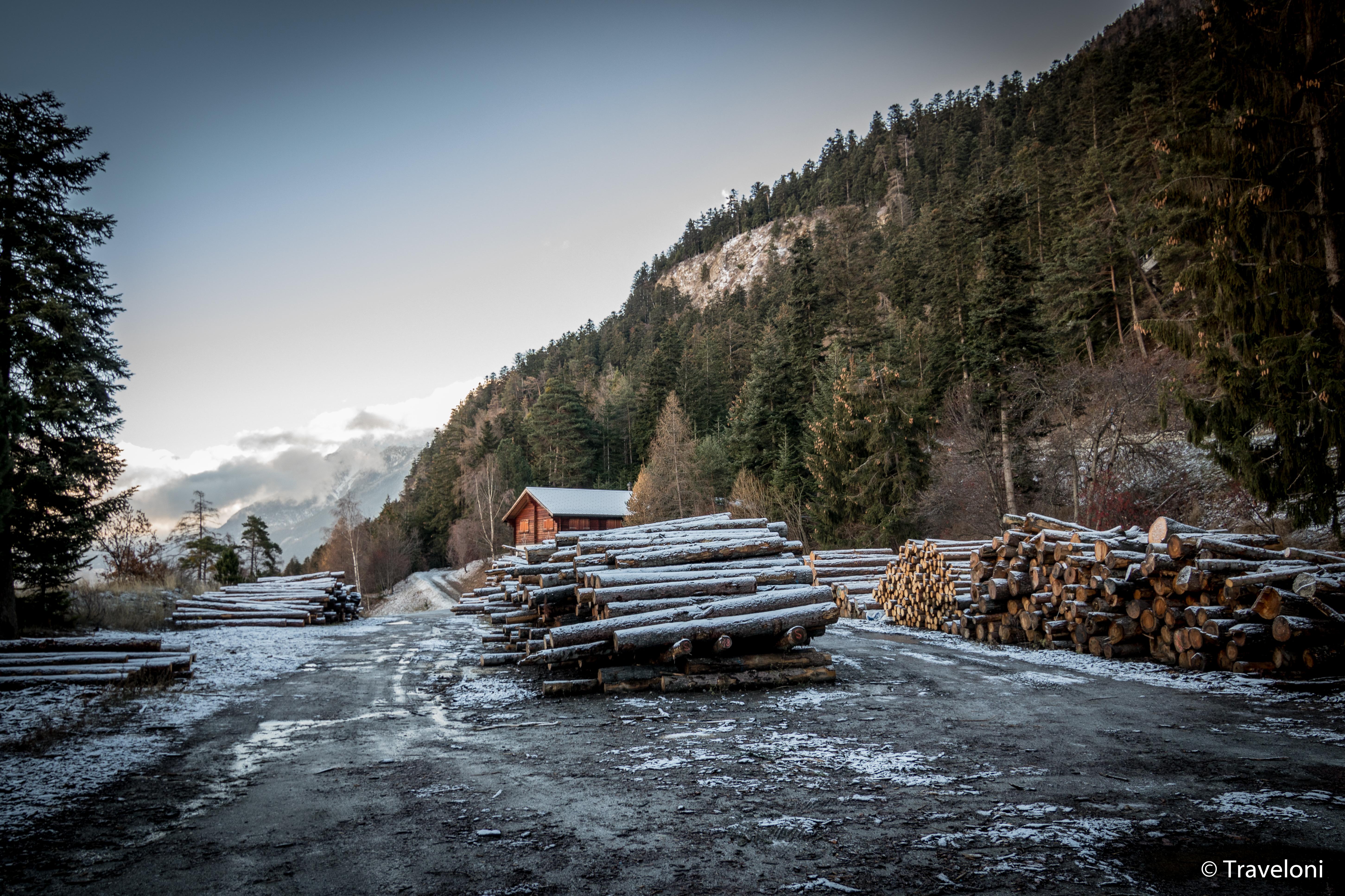 Burgerschaft Visp, Schutzwaldbewirtschaftung Wisland